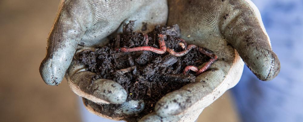 slider wormen